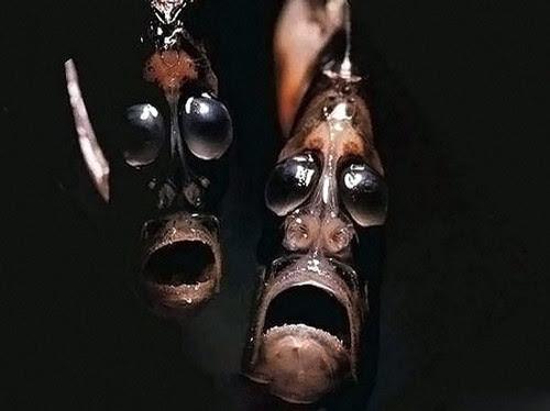 quái vật, đáy biển, loài cá, hình dạng