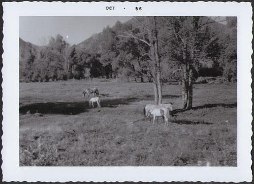 Yellowstone1956_Horses