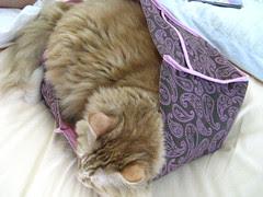 Jasper in the brown bag