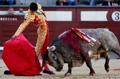 El Refugio recoge 60.000 firmas contra las corridas de toros en  Madrid.