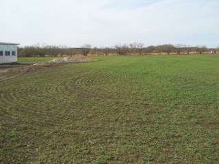 Wheat 2012 Dec 17
