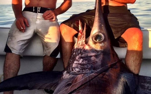 Crews go the distance, haul in large swordfish off N.C. coast