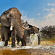 BLOG: Today is Nature Photography Day! - Images | Art Wolfe Stock Photography 888-973-0011