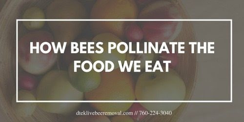 How Bees Pollinate The Food We Eat - Live Bee Removal