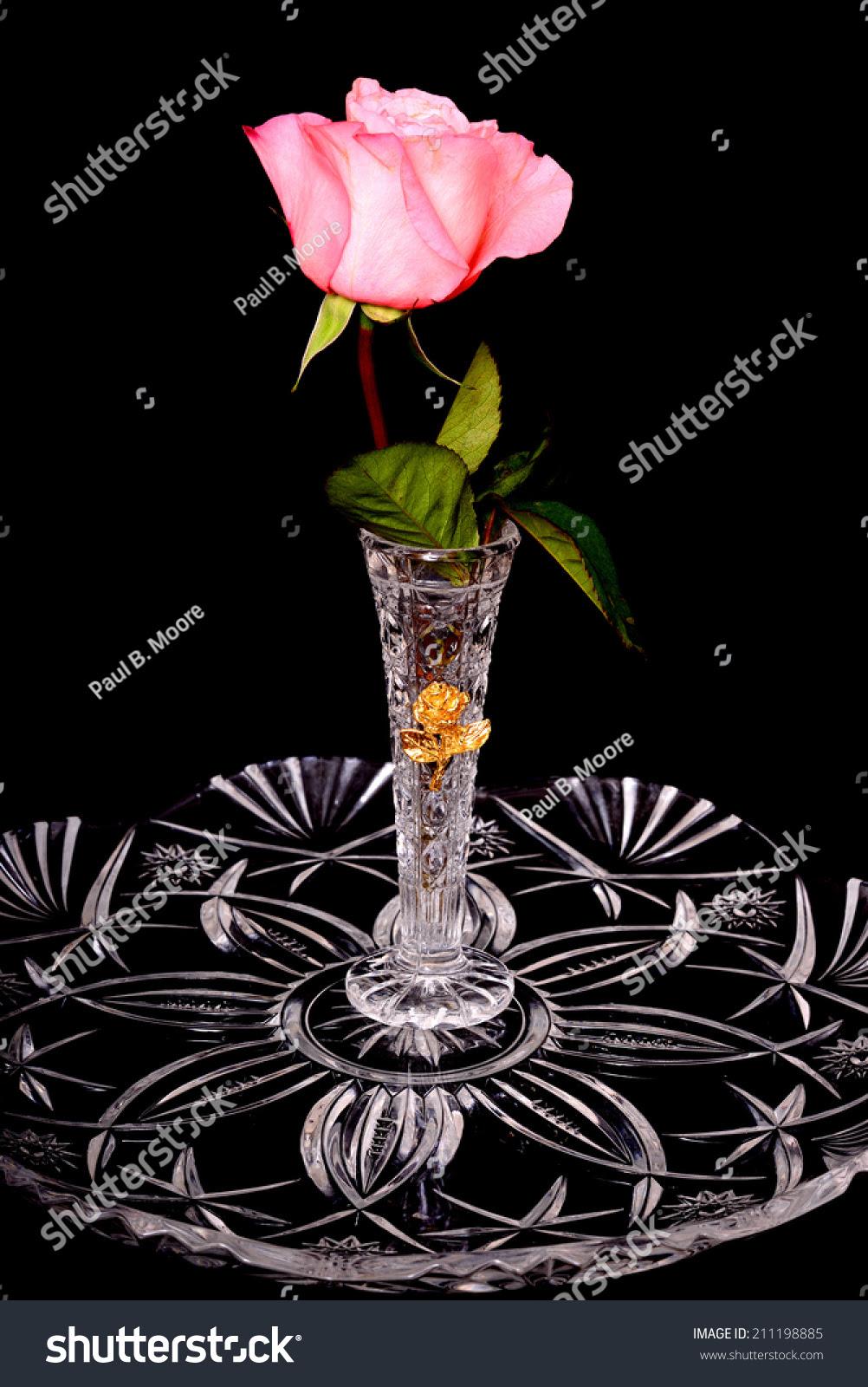 Extraordinary 4 Foot Single Stem Rose - The Green Head |Tall Pink Roses Single