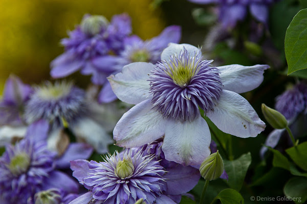 flowers in violet