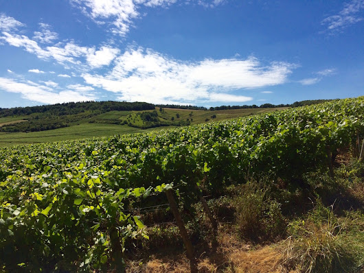 Wine Country — Conveying a Sense of Place