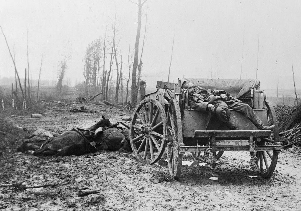 Os animais também lutaram na Primeira Guerra Mundial 24