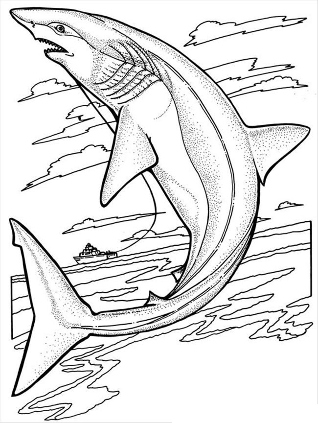 Free Printable Shark Coloring Pages For Kids - jeffersonclan