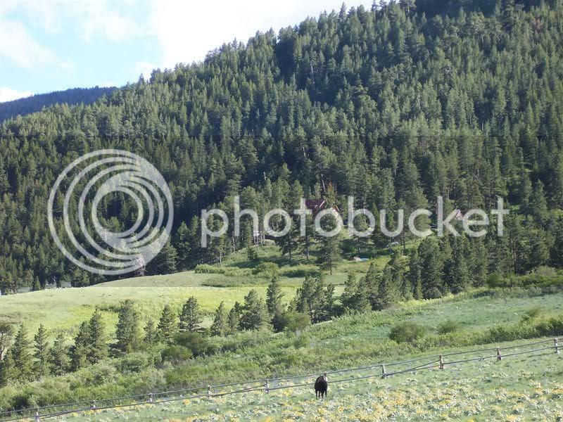pasture_spahn_before