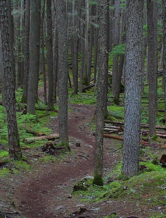 foresttrail