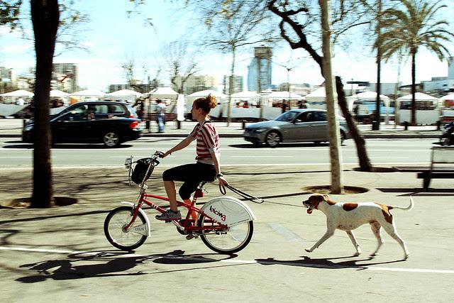 bicing dog
