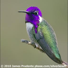 http://cts.vresp.com/c/?BirdNote/d5232ba1b6/b0eaa8d8cc/2a733d597b
