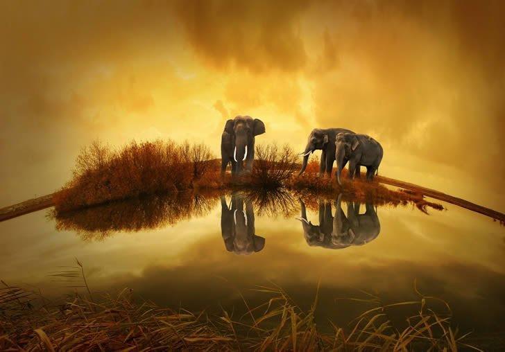 elefantes atardecer