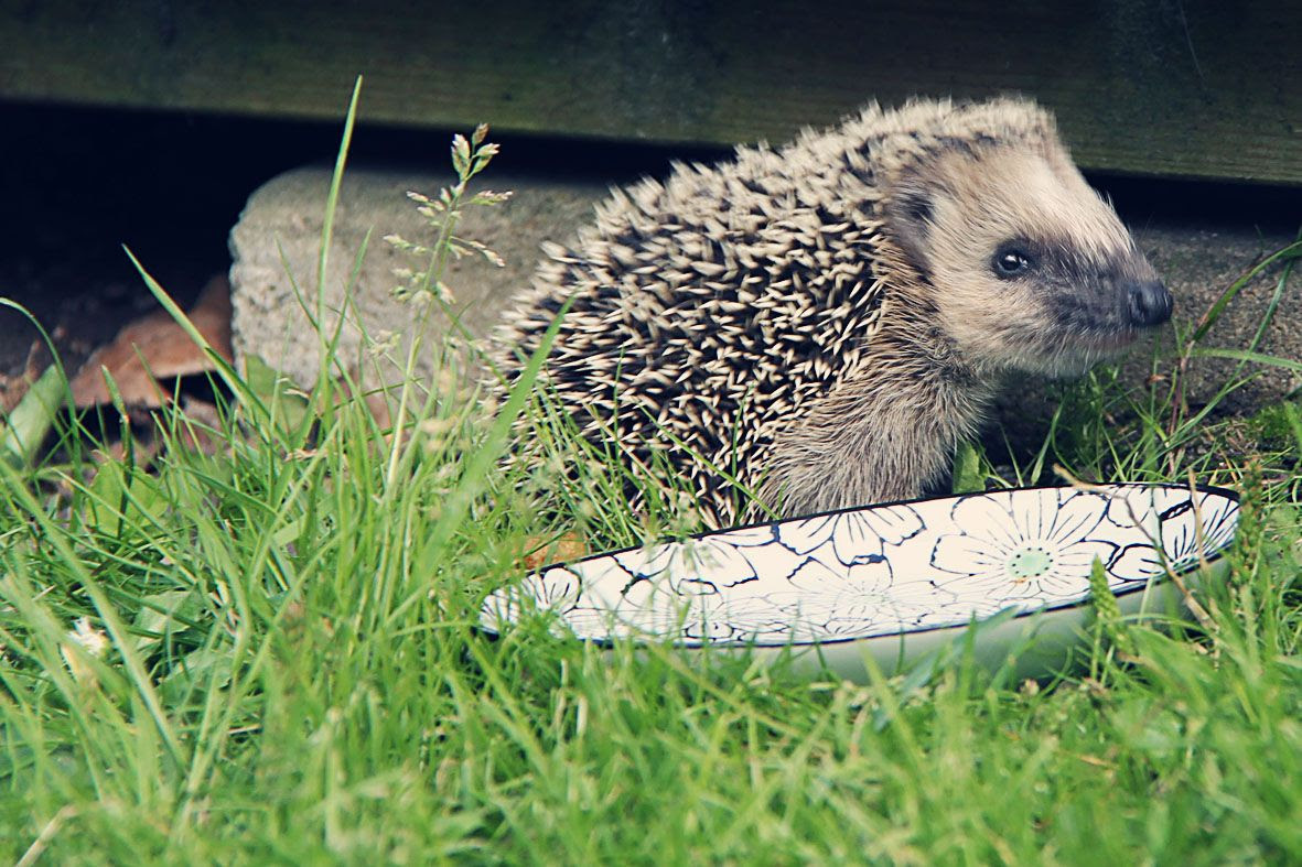 7.17, Oh hedgehog, how do I love thee - let me count the ways..!