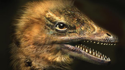 Chicken grows face of dinosaur