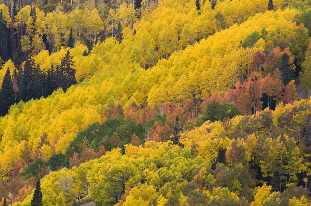 Autumn in Utah, Fall colors from Empire Pass above the Deer Valley Resort in Park City