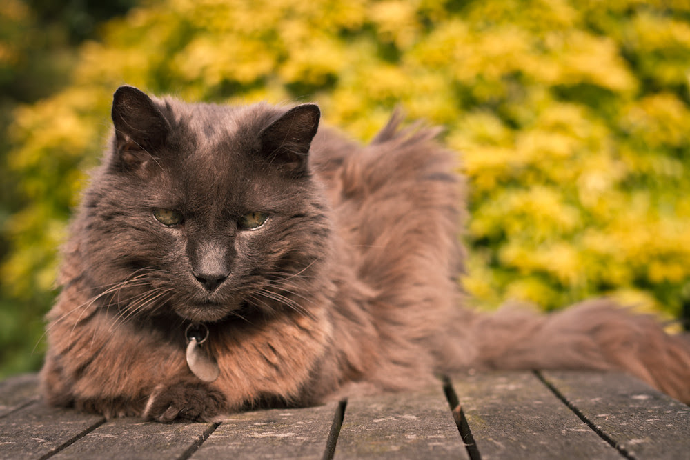 Posky in the sun