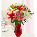 Lovely Lilies - Flowers by 1-800 Flowers - Next Day Delivery - Flower Arrangements, Bouquets & Gifts for Any Occasion