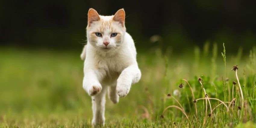 How To Get Rid Of Stray Cats Pooping In Yard