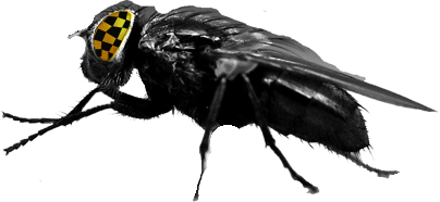 Pestrid | Pest inspections | pest spray and termite protection|Blog