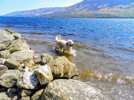 10-17th June, dog friendly holiday cottage Loch Earn with free fishing, boules and fun putting - | in Lochearnhead, Stirling | Gumtree