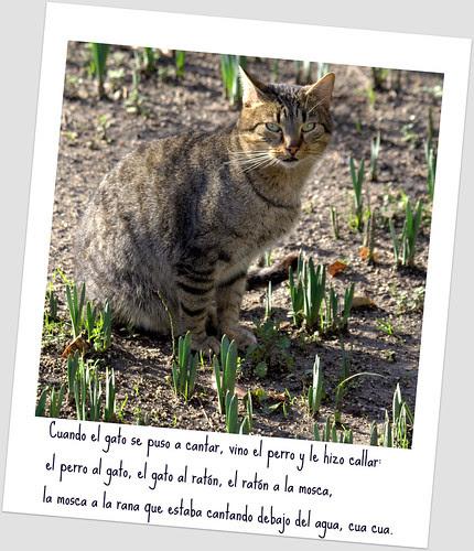un gato en el botanico