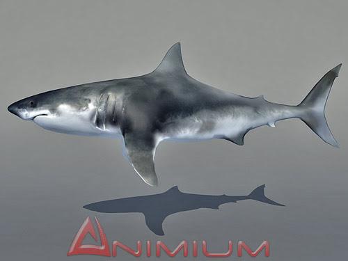 3D models Shark | Free 3D Models for Maya and 3DS MAX