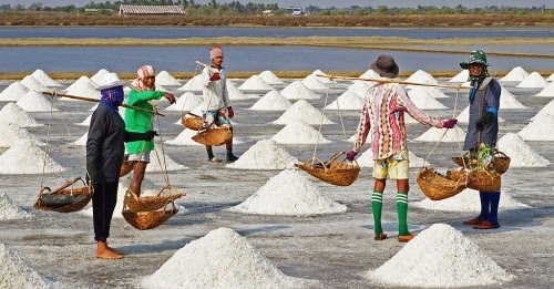 petani-garam
