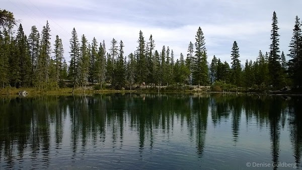 trees lining one of the Grassi Lakes, Canmore, Alberta