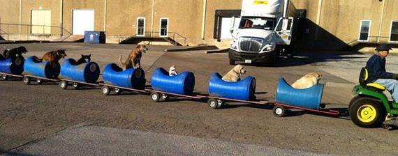 rescued_dog_train