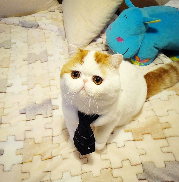 Snoopy, The Cutest Cat Ever