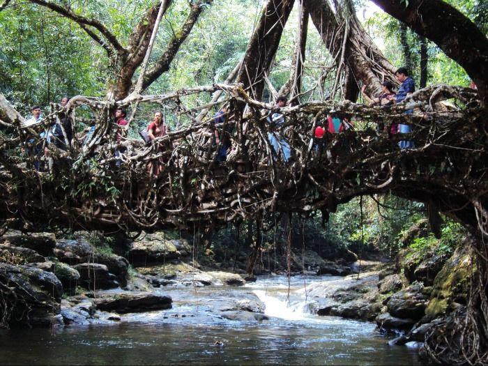 Root bridges Shillong for a perfect romantic hideout