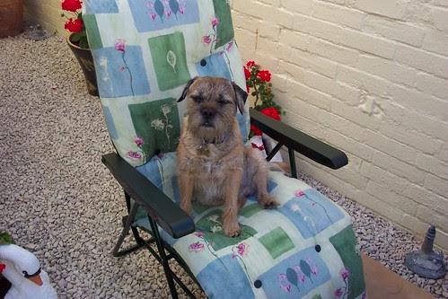 Monty enjoying the sunshine!