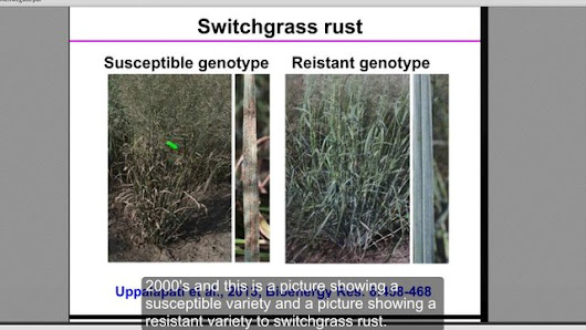 An Overview of Switchgrass Diseases