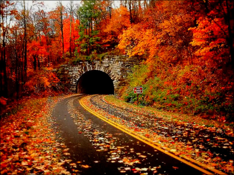 Autumn Images Autumn Hd Wallpaper And Background Photos 32320326
