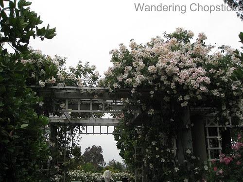 The Huntington Library, Art Collections, and Botanical Gardens (Rose Garden) (Spring) - San Marino 4