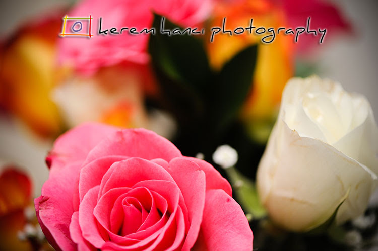 Lovely, colorful roses in a winter rainbow bouquet.