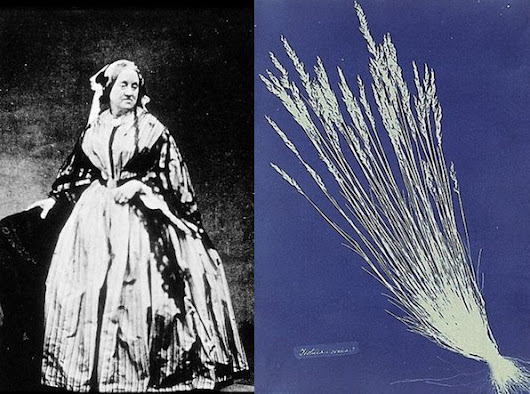The First Female Photog Was an English Botanist Who Made Cyanotypes of Plants