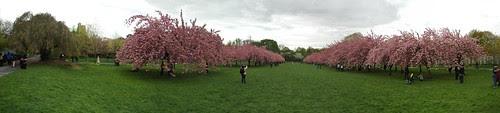 Panorama, Cherry Esplanade, Brooklyn Botanic Garden