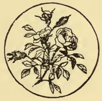 Image result for virga talu