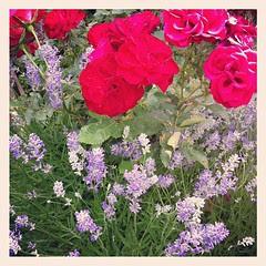 Mom's flowers:)) I fiori della mamma:))