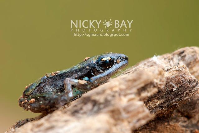 Frog - DSC_6111