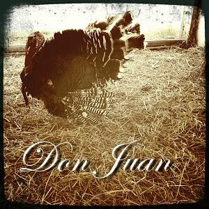 Don Juan Turkey