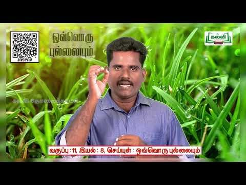11th Tamil ஒவ்வொரு புல்லையும் அலகு 8 பகுதி 4  Kalvi TV