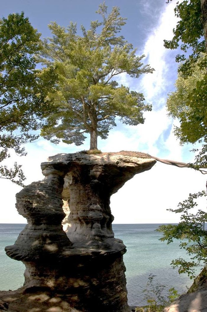 Tree Roots                                                    Extend Across A Gap                                                    To The Mainland For                                                    Nutrients