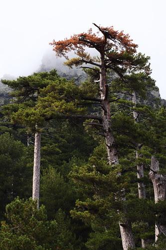 Un arbre coloré