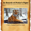 In Search of Putin's Tiger - documentary
