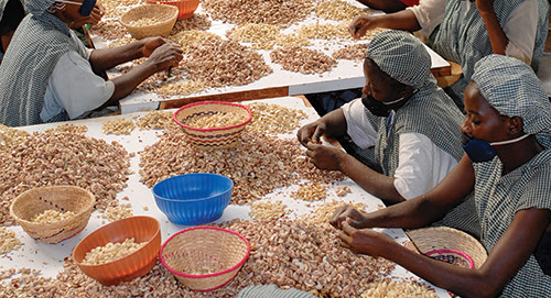 Cashing in on the cashew nuts boom | Africa Renewal Online