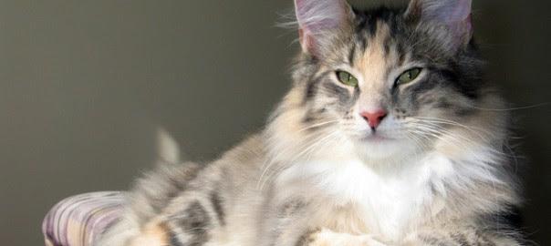 cat-1-1566138-640x480